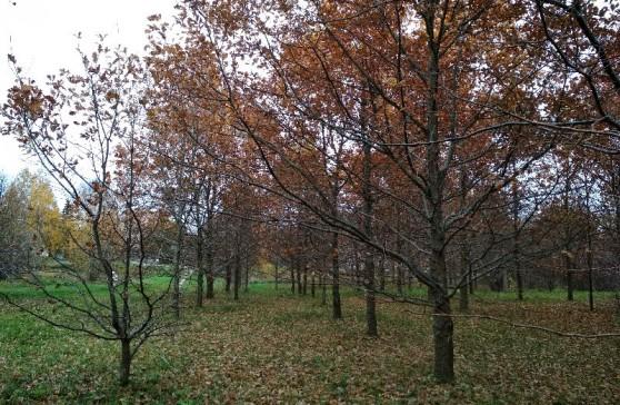 Daugiau nei 800 medžių numatyta išpjauti Eibariškių parke. Savivaldybės tinklalapio nuotrauka.